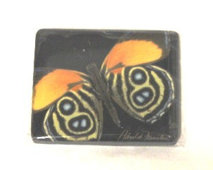 Harold Feinstein Butterfly Magnets- Yellow with Eyes