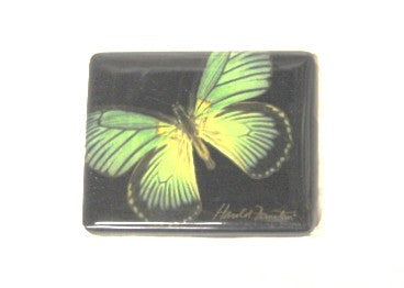 Harold Feinstein Butterfly Magnets- Green with Stripes