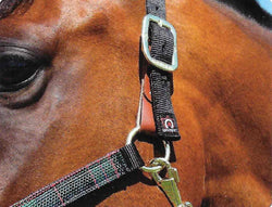 Kensington Premium Breakaway Halter Set w/Lead - Freedom Day Sales