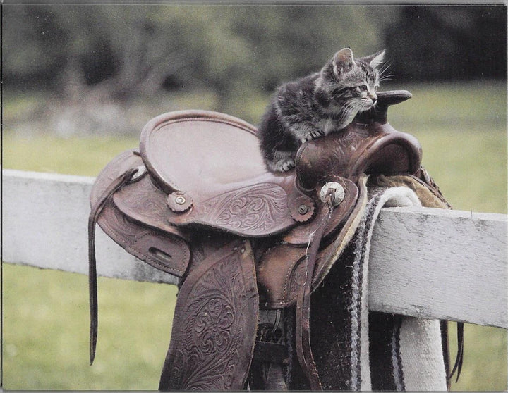 Kitten and Saddle 8 Blank Notecards with Envelopes