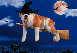 Any more candy and I'm gonna need a bigger broom! Happy Halloween Greeting Card