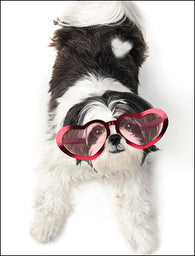 Warm Fuzzy Puppy Valentine's Day Cards