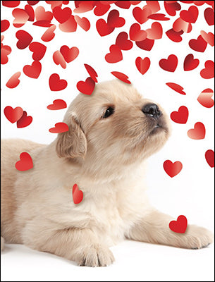 Hearts and Puppies Valentine's Day Card Set-Front