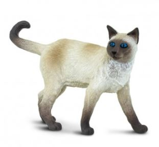 Safari Siamese