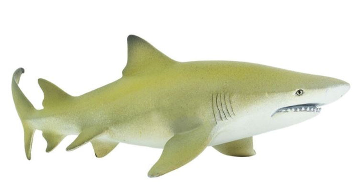 Safari Lemon Shark