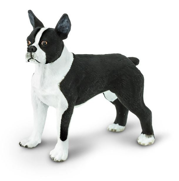 Safari Boston Terrier