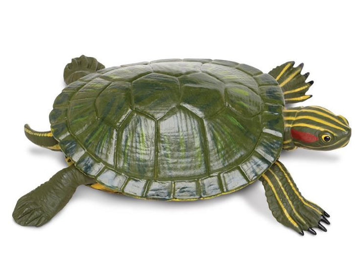 Safari Red Eared Slider Turtle