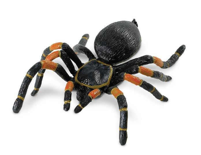 Orange Kneed Tarantula