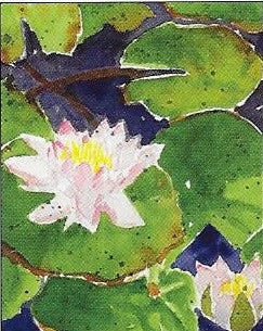 Boxed Notecards-Water Lilies