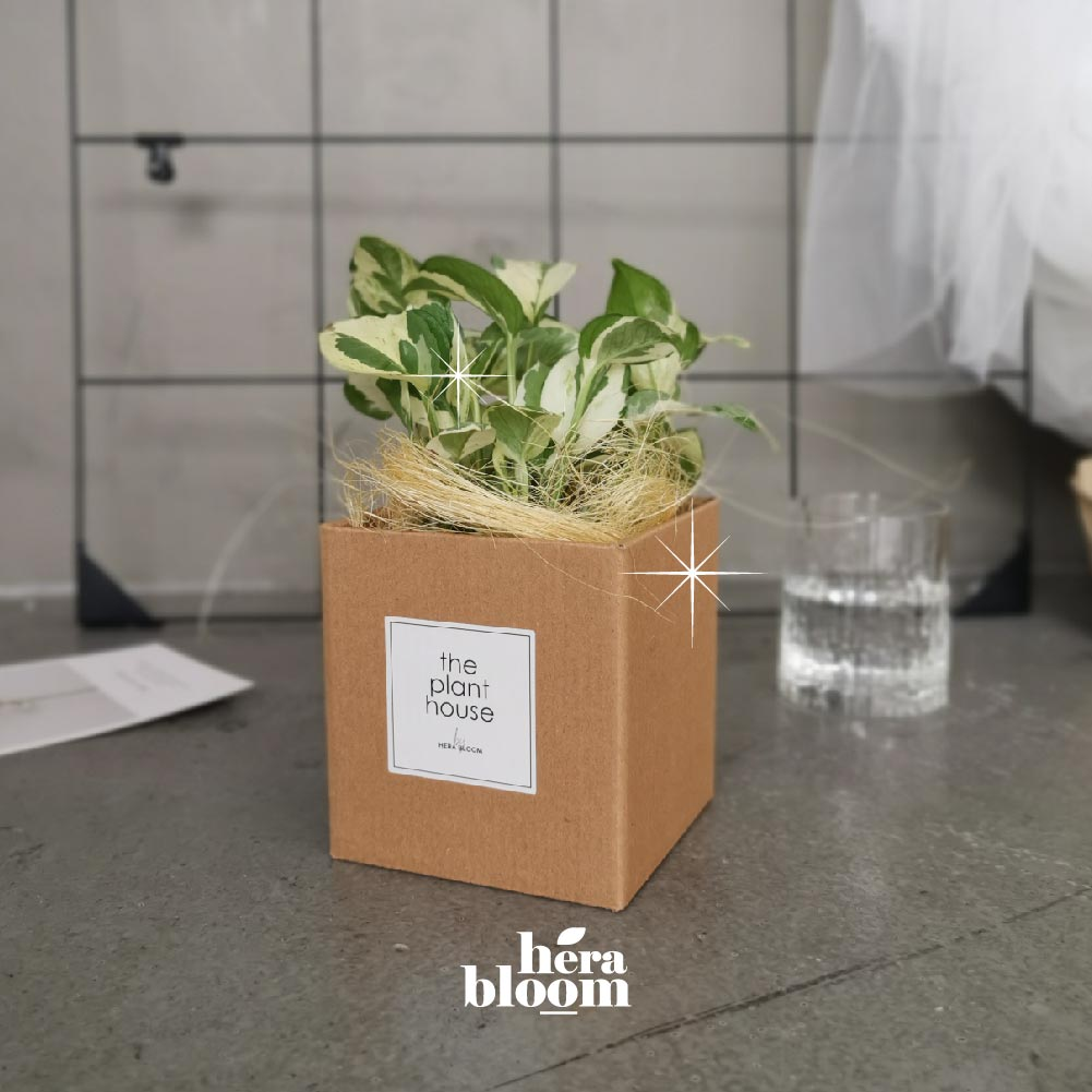 N-Joy Plant Gift - Hera Bloom