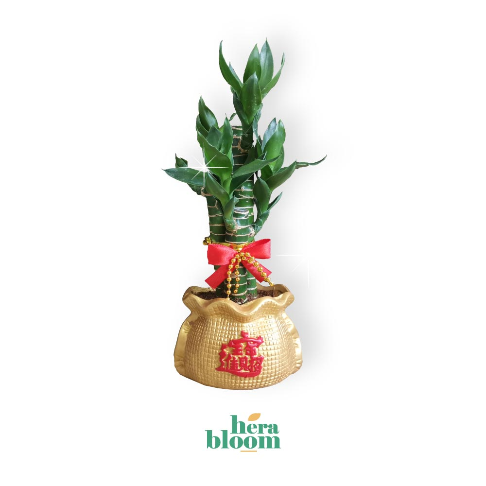 Lotus Bamboo 3in1 - Hera Bloom