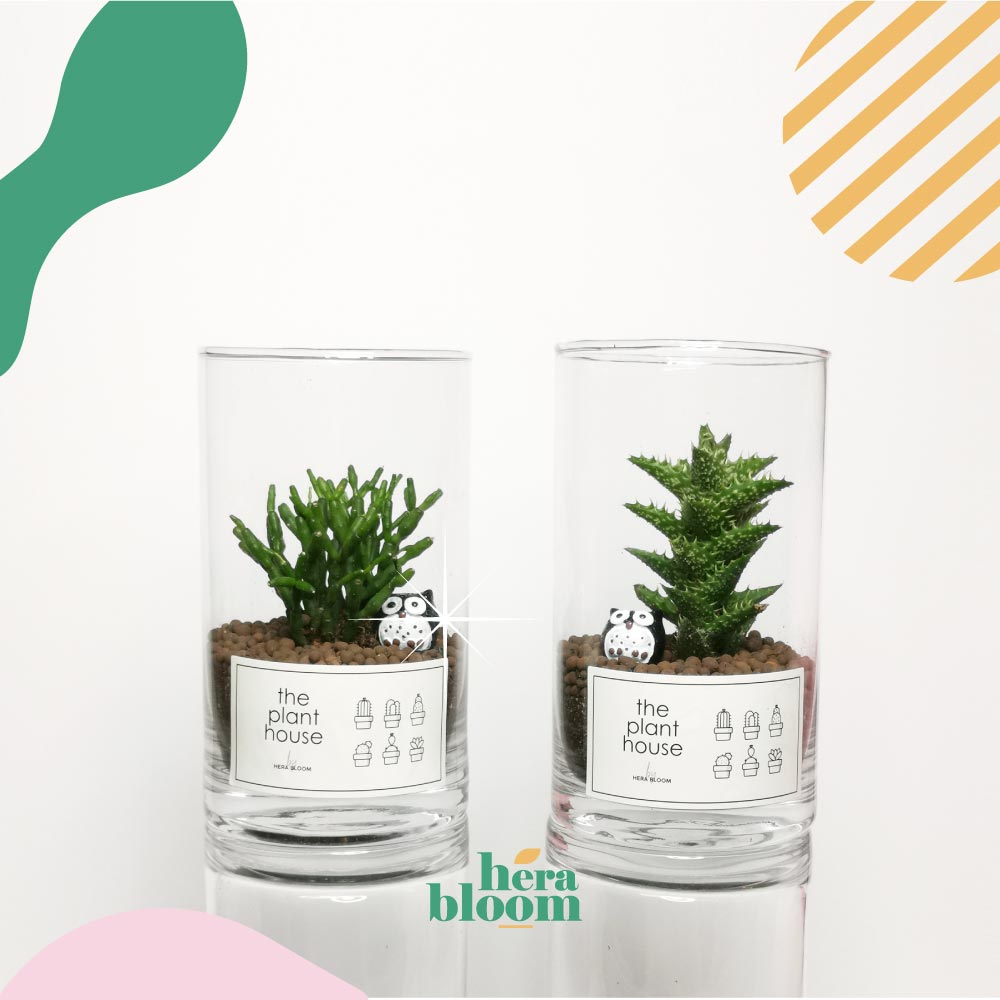 Cactus Set - Hera Bloom