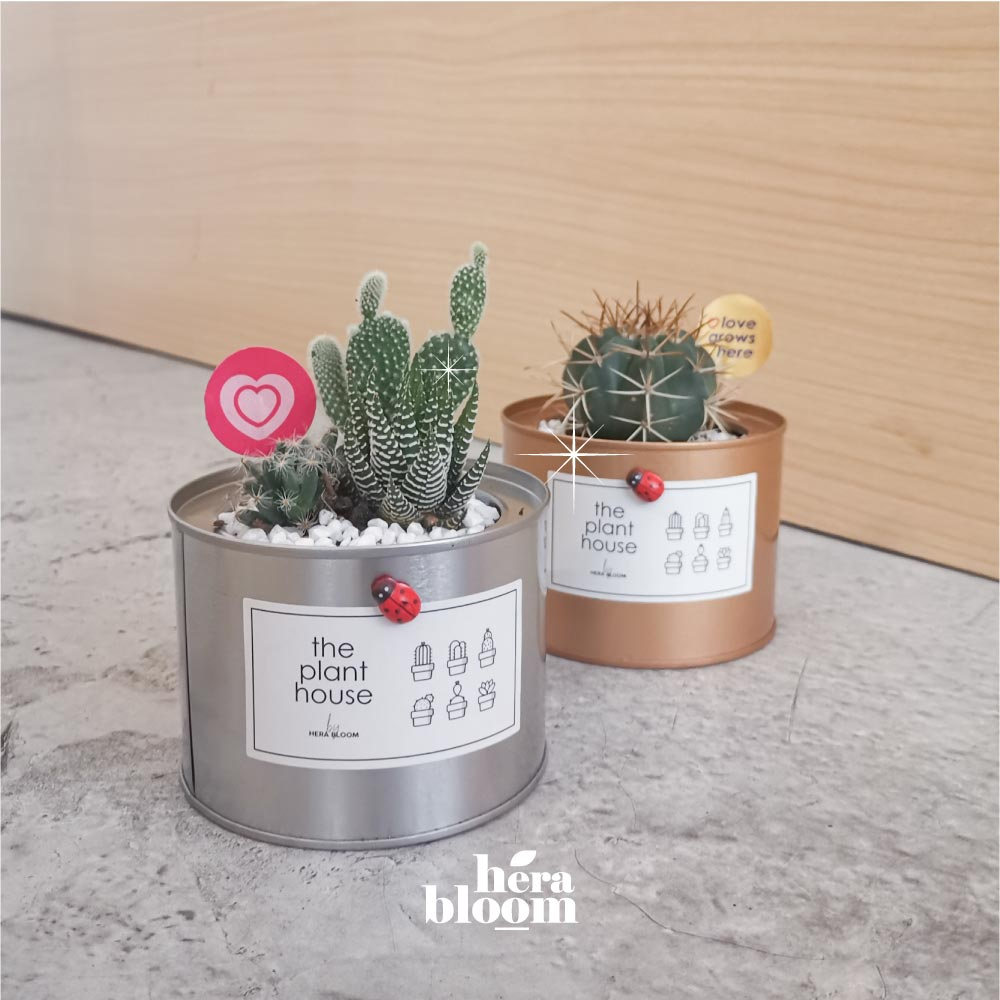 Couple Cactus Set - Hera Bloom