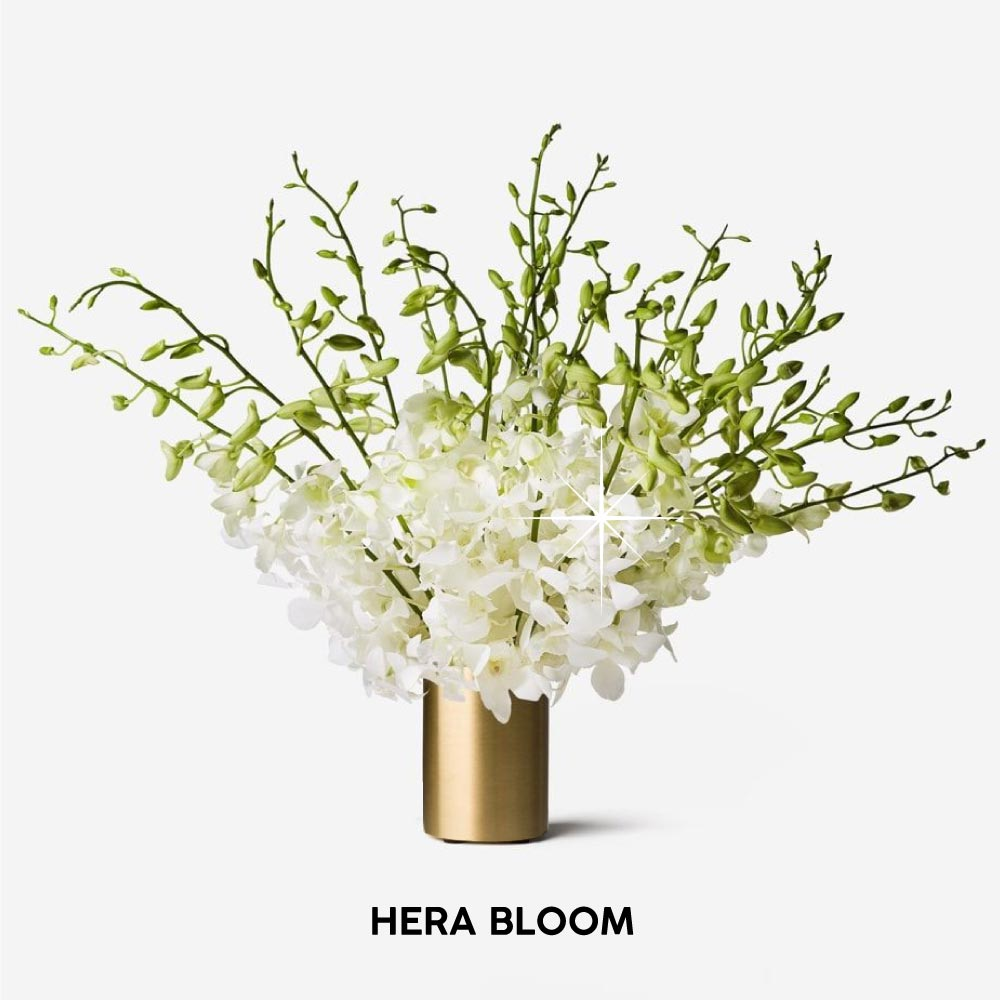 White Dendrobium Cut Orchid - Hera Bloom