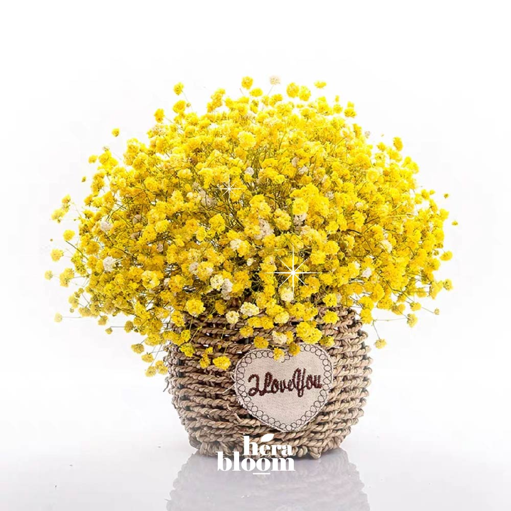 Dried Yellow Baby Breath in Basket - Hera Bloom