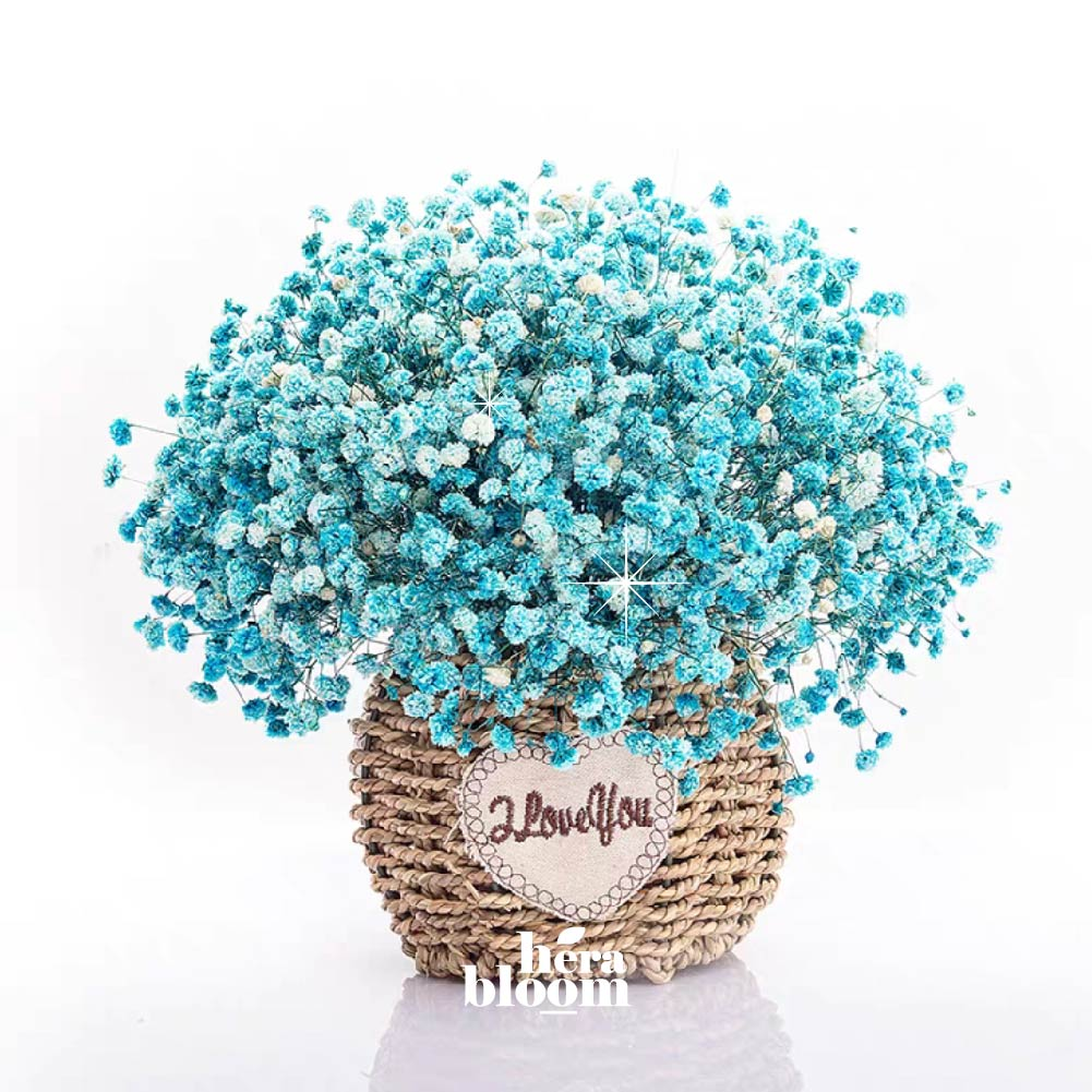 Dried Tiffany Baby Breath in Basket - Hera Bloom
