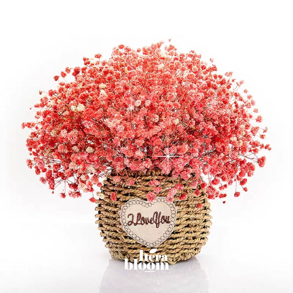 Dried Red Baby Breath in Basket - Hera Bloom
