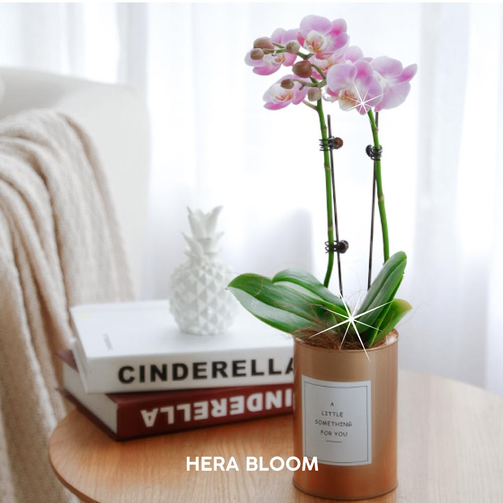 Pink Potted Orchid (Gold) - Hera Bloom