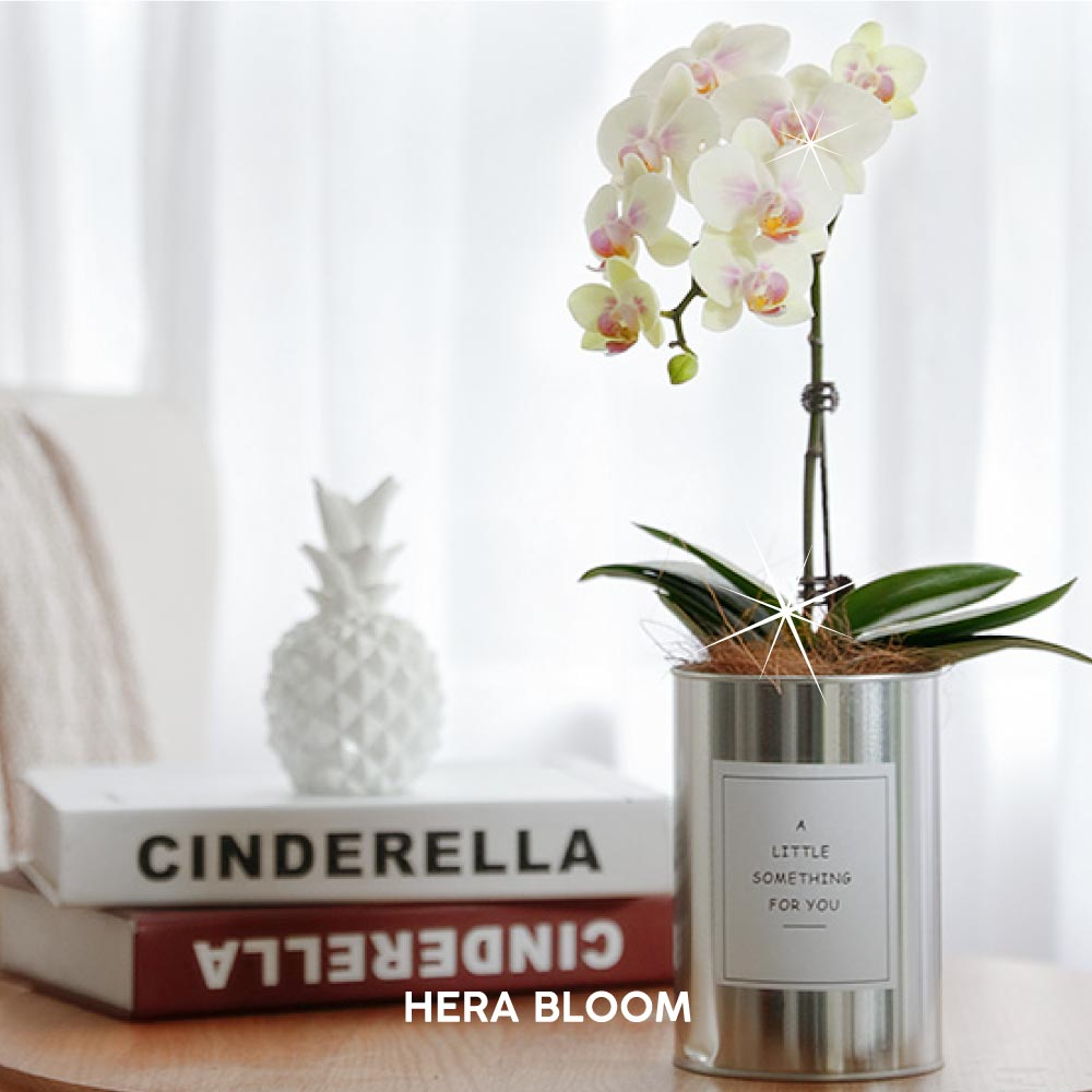 Yellow Potted Orchid (Silver) - Hera Bloom
