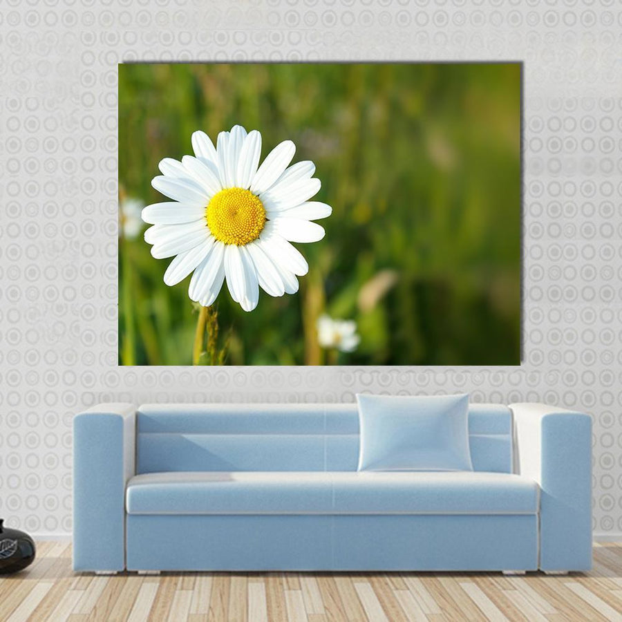 White Marguerite Flower Multi Panel Canvas Wall Art 4 Square / Small / Gallery Wrap Tiaracle