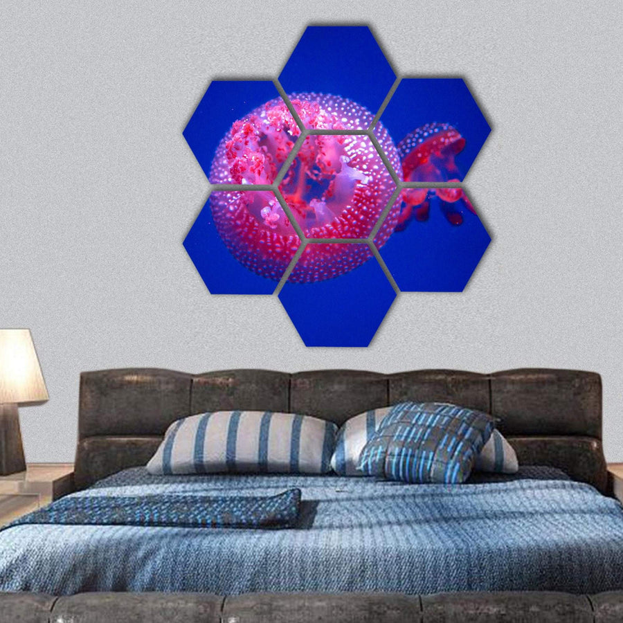 Australian Spotted Jellyfish Hexagonal Canvas Wall Art 1 Hexa / Small / Gallery Wrap Tiaracle