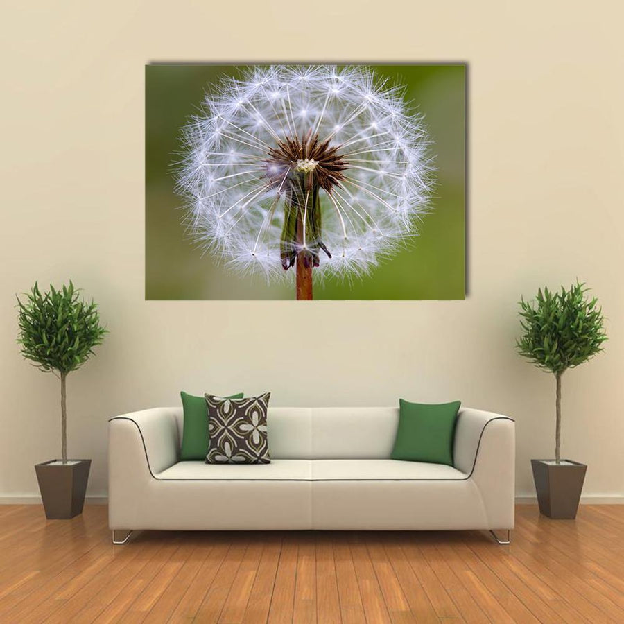 Dandelion Seeds Ball Canvas Wall Art-4 Square-Small-Gallery Wrap-Tiaracle