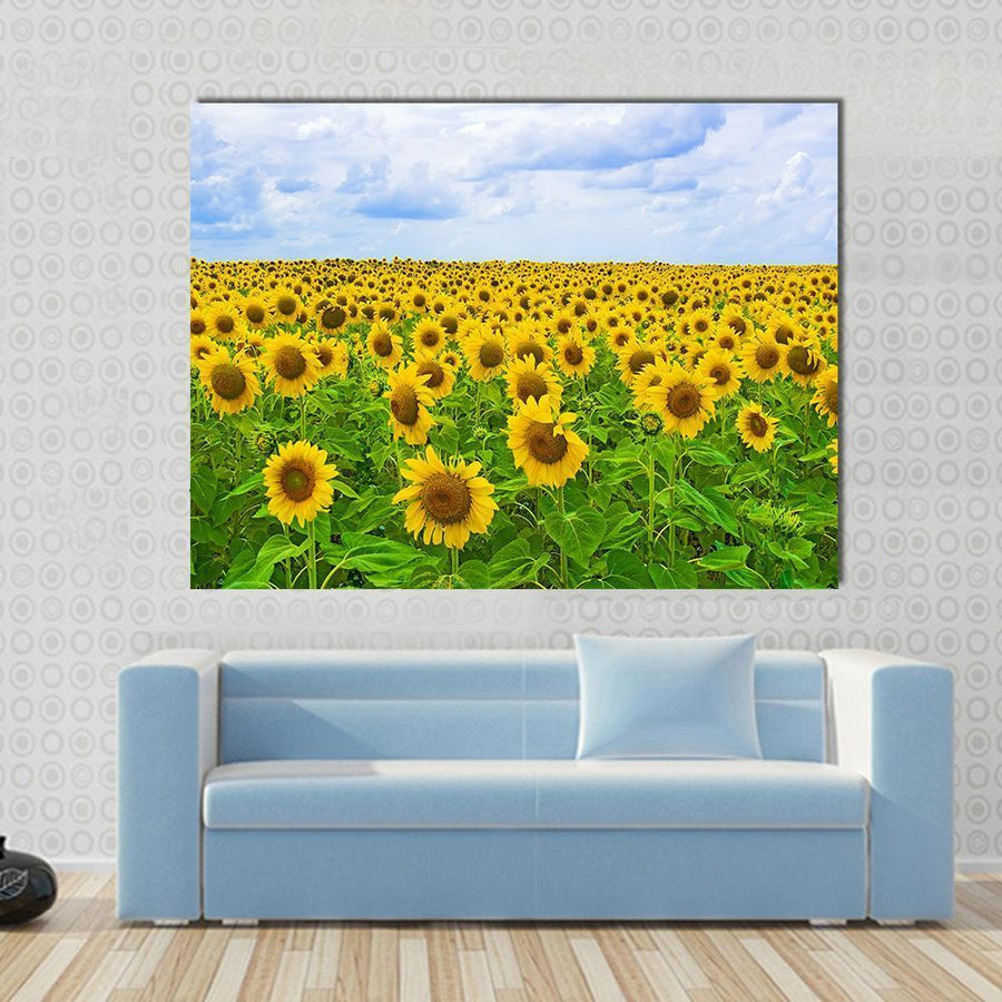 Fine Summer Field Of Sunflowers In The Blue Sky Canvas Panel Painting Tiaracle