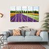 Flower Field In Hokkaido Multi Panel Canvas Wall Art 5 Horizontal / Small / Gallery Wrap Tiaracle