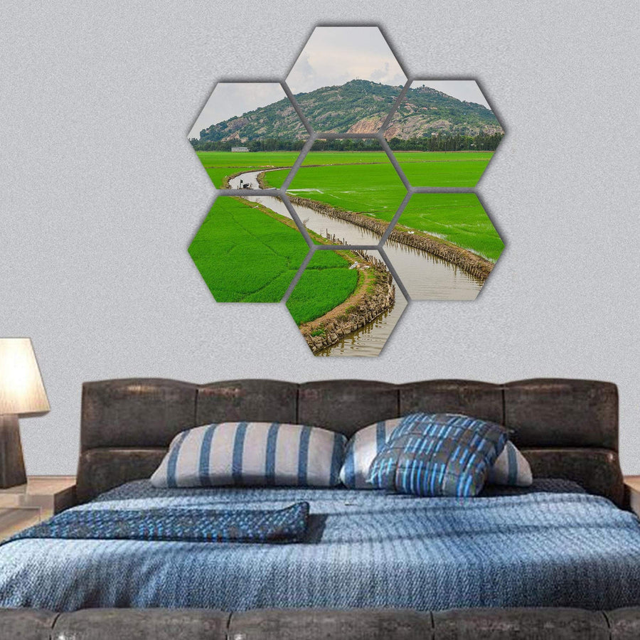 Green Rice Field In Southern Vietnams Hexagonal Canvas Wall Art 1 Hexa / Small / Gallery Wrap Tiaracle