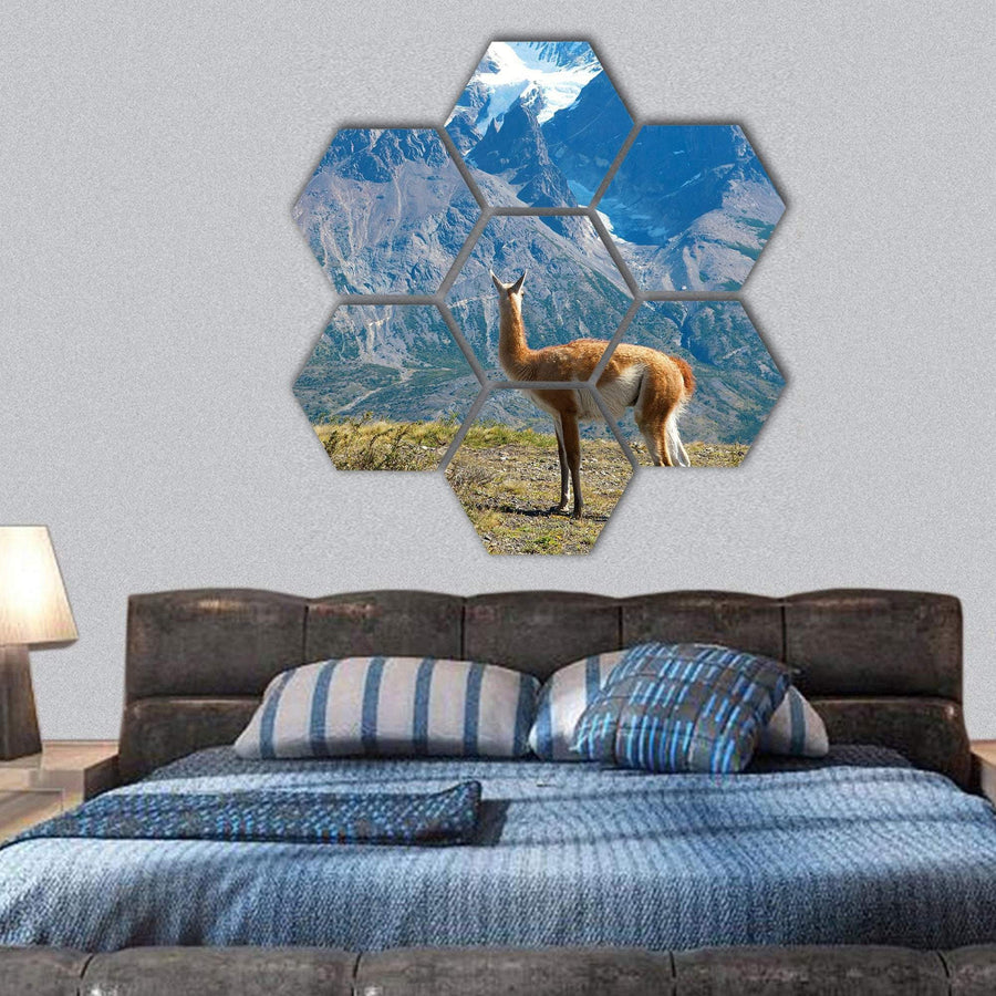Guanaco In Torres del Paine National Park Hexagonal Canvas Wall Art 1 Hexa / Small / Gallery Wrap Tiaracle