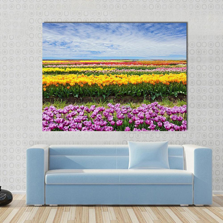 Horizontal Row Of Tulips On The Field In The Spring Time Multi Panel Canvas Wall Art 5 Horizontal / Small / Gallery Wrap Tiaracle