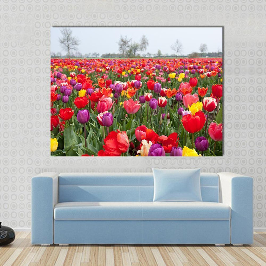 Many Beautiful Coloured Tulips In The Netherlands Multi Panel Canvas Wall Art 4 Horizontal / Small / Gallery Wrap Tiaracle
