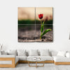 Spring Flowers In Holland Canvas Wall Art-4 Square-Small-Gallery Wrap-Tiaracle
