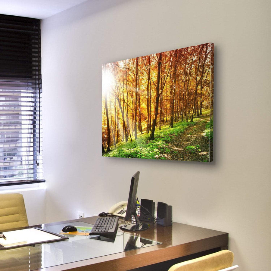 Sun In The Autumn Forest Canvas Panel Painting Tiaracle