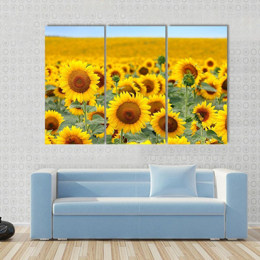 Beautiful Sunflower Field In Summer Canvas Panel Painting Tiaracle