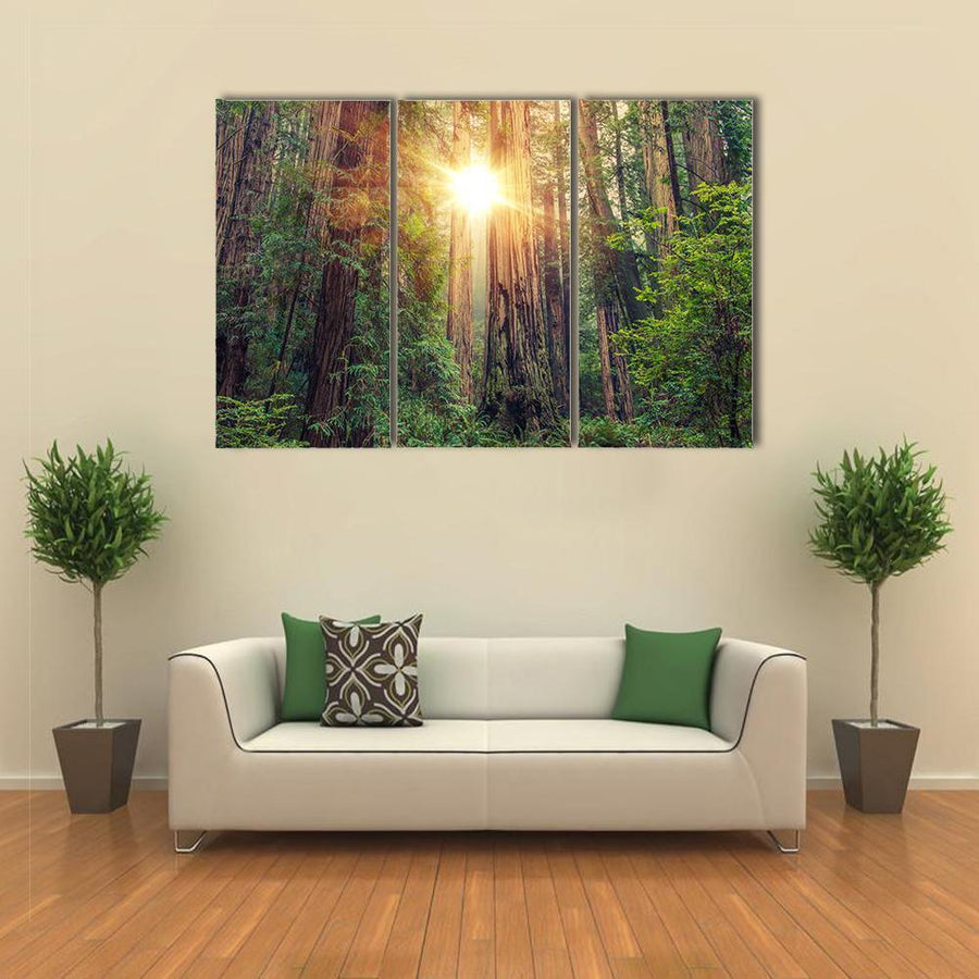 Sunny Redwood Forest In Northern California, United States Canvas Panel Painting Tiaracle