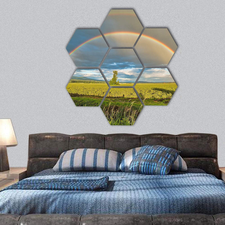 Tree In A Blueberry Field Under A Double Rainbow Hexagonal Canvas Wall Art 1 Hexa / Small / Gallery Wrap Tiaracle