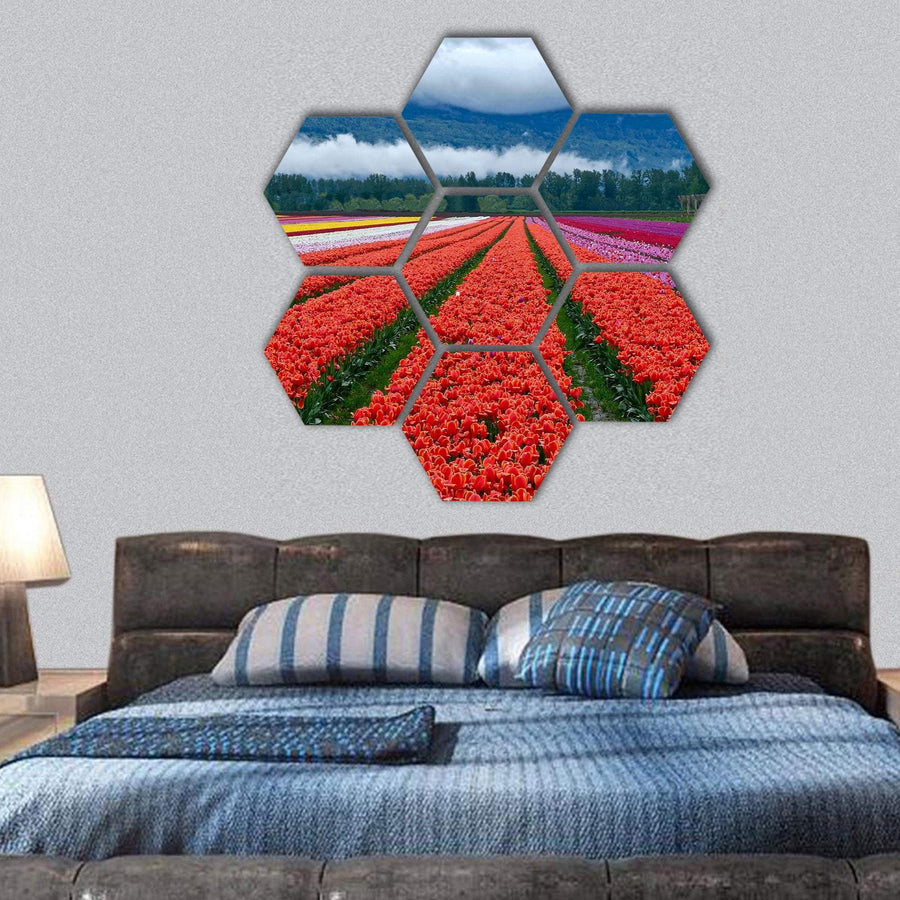 Tulip Festival In Chilliwack Hexagonal Canvas Wall Art 1 Hexa / Small / Gallery Wrap Tiaracle