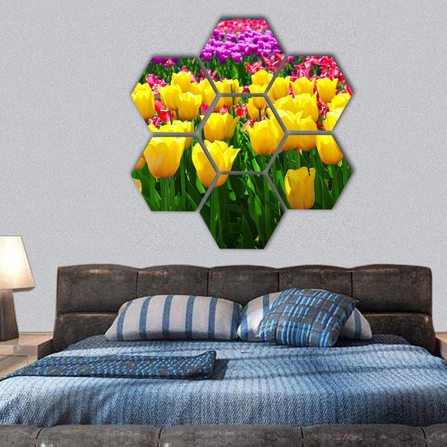 Tulips Field Yellow Flowers Hexagonal Canvas Wall Art 1 Hexa / Small / Gallery Wrap Tiaracle