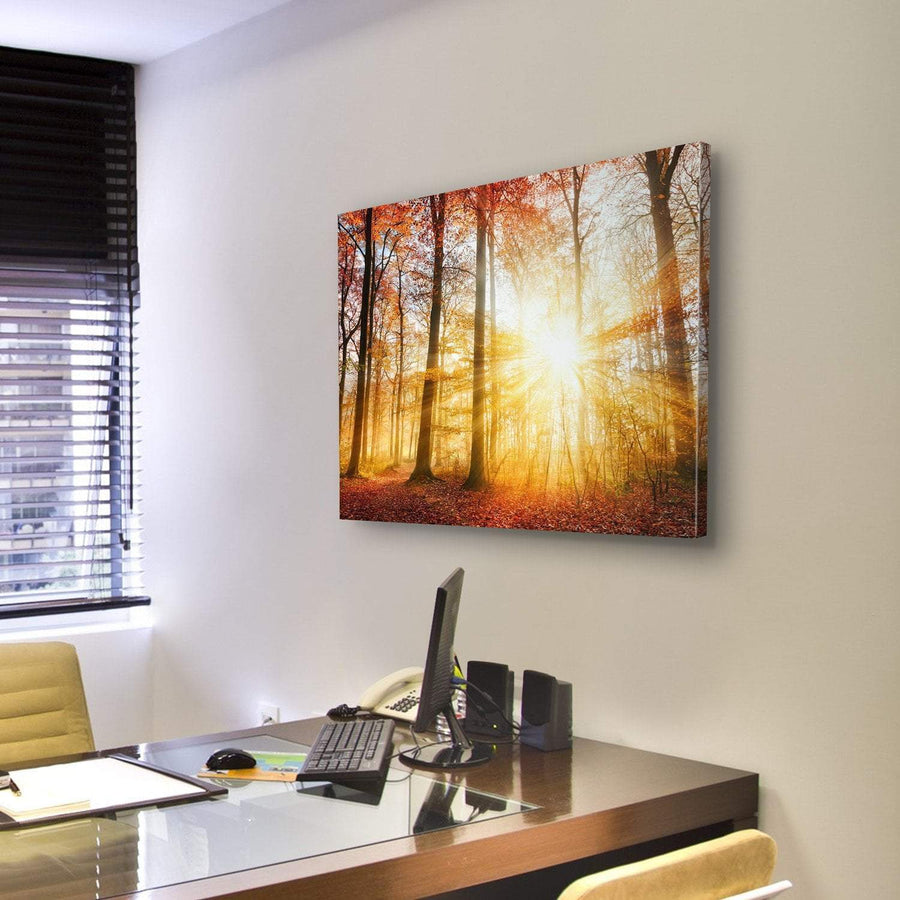 Warm Autumn Scenery In A Forest, With The Sun Rays Canvas Panel Painting Tiaracle