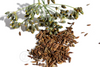 Opulent Seeds Bronze Fennel Smokey Seeds Fresh Dried Bean Natural