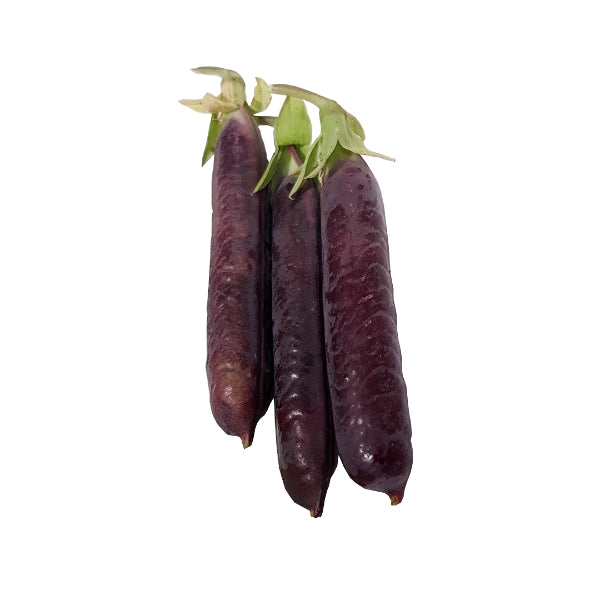 Blue Pod Capucijners peas purple bean pods opulent seeds non-gmo plants