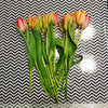 'Peach and Pink' Tulip Bouquet