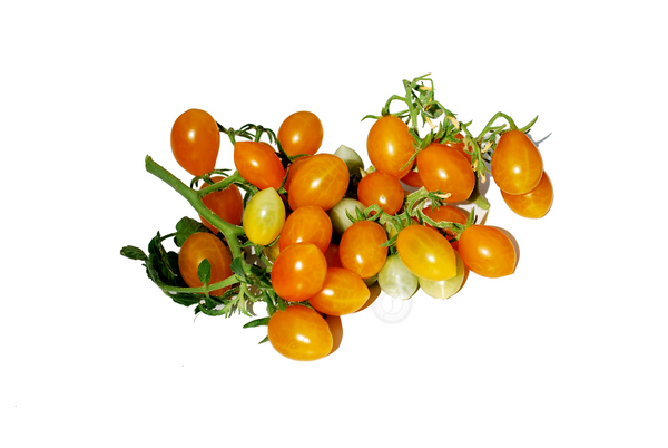 Opulent Seeds Ildi Cherry Tomato natural berries beans fruit