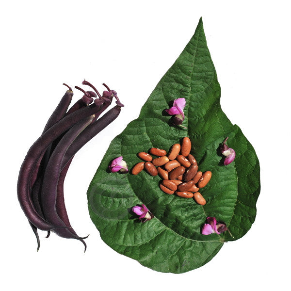 Opulent Seeds Royal Burgundy Bean Seeds Natural Organic Ontario Canada Toronto