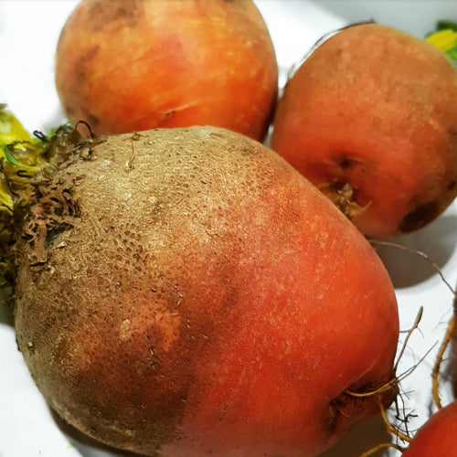Beets - 'Touchstone Gold' Seeds