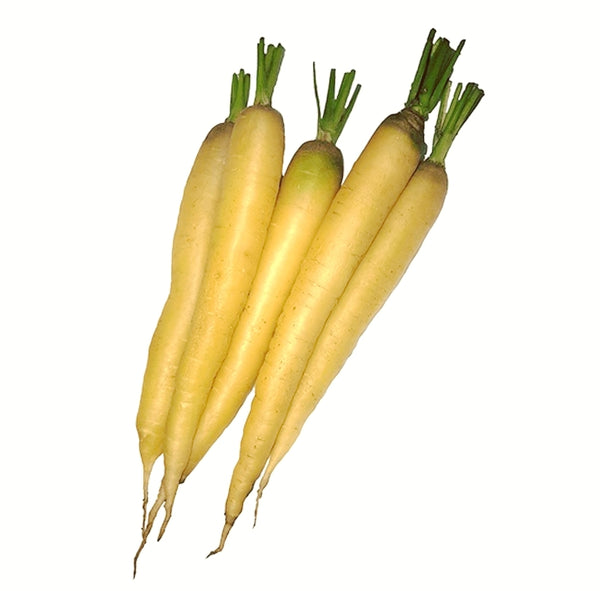 Carrots - 'White Satin' Seeds