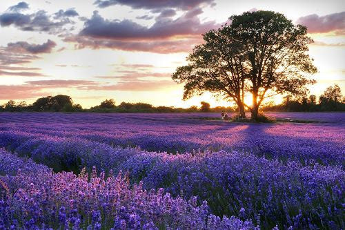 Natural Perfumery at Mayfield Lavender - 3rd July 2018