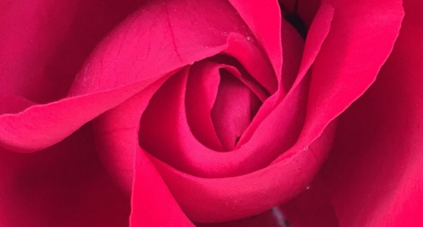 A Rose Retreat - Botanical Skin Care & Aromatherapy Course, 5 nights in Bulgaria, May 2022