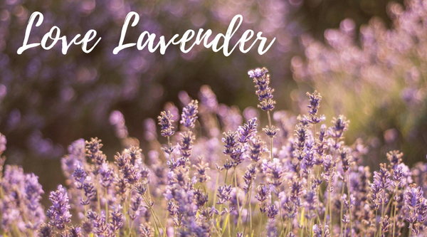 Plant to Perfume at Mayfield Lavender Fields, Surrey - 17th July 2020